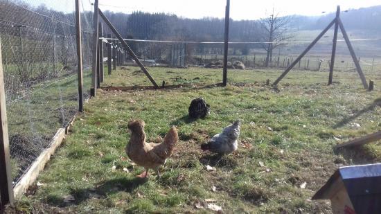 Petites poules pour oeufs cocotte du petit dejeuner